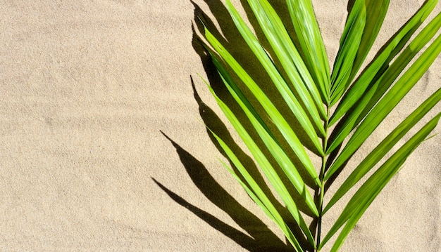 Foglie di palma tropicale sulla sabbia.