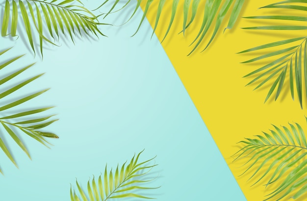 Le foglie di palma tropicale su sfondo giallo e blu chiaro. natura minima. estate stilizzata.