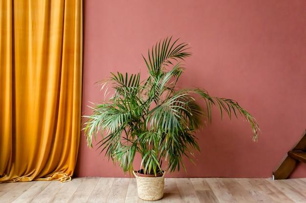 Palma tropicale in casa in borsa di paglia sul rosso