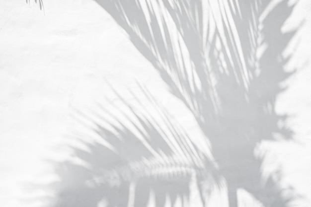 La palma tropicale lascia le ombre su fondo strutturato bianco