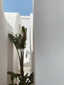 Palma tropicale con foglie verdi lussureggianti vicino alla casa beige, edificio resort di fronte al cielo blu
