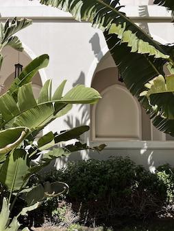 Palma tropicale con foglie verdi lussureggianti vicino alla casa beige, edificio del resort