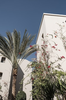 Palma tropicale con foglie verdi lussureggianti vicino alla casa bianca, edificio resort con cielo blu