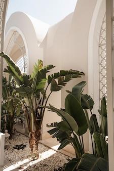 Palma tropicale con foglie verdi lussureggianti vicino alla casa bianca