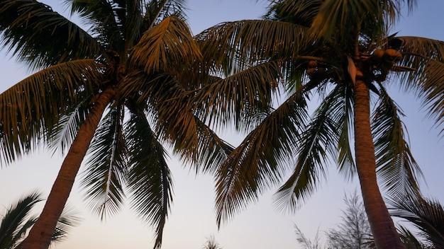 Palma tropicale con la luce del sole sul cielo al tramonto e sullo sfondo astratto della nuvola. vacanze estive e concetto di avventura di viaggio nella natura. stile di colore effetto filtro tono vintage.