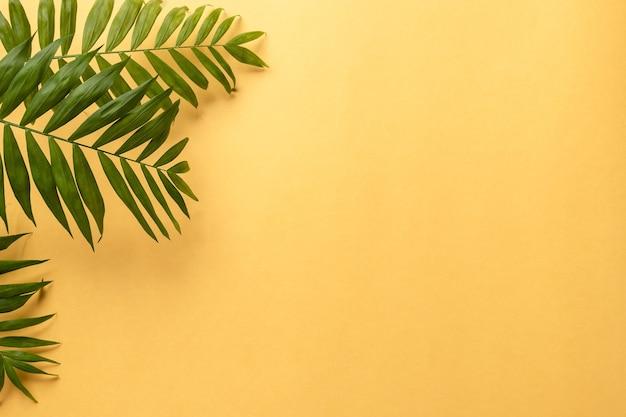 Fogliame di piante tropicali su carta gialla. colore dell'anno 2021