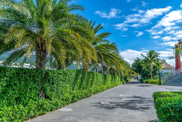 Palma verde della pianta tropicale