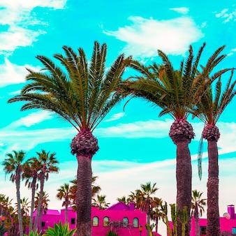 Pianta tropicale. posizione tropicale. l'arte della moda delle palme delle canarie