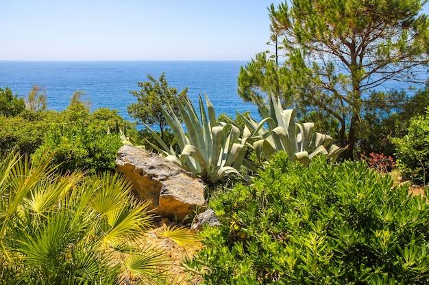 Piante tropicali vicino al mar mediterraneo