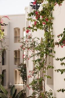Piante tropicali con bellissimi fiori rossi e foglie verdi contro un edificio beige con ombre di luce solare