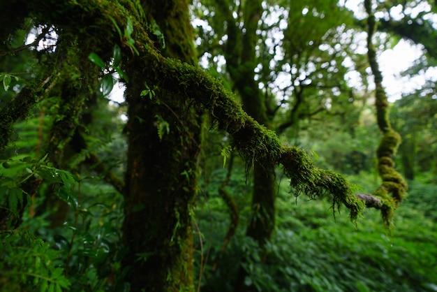 Foresta pluviale tropicale a doi inthanon national park, chiang mai, thailandia