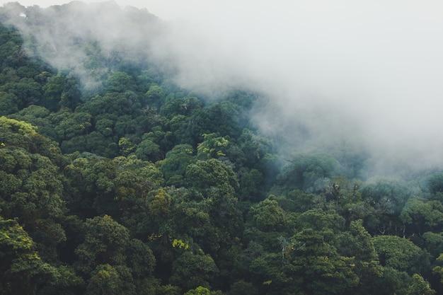 Foresta pluviale tropicale con montagna e nebbia al mattino.