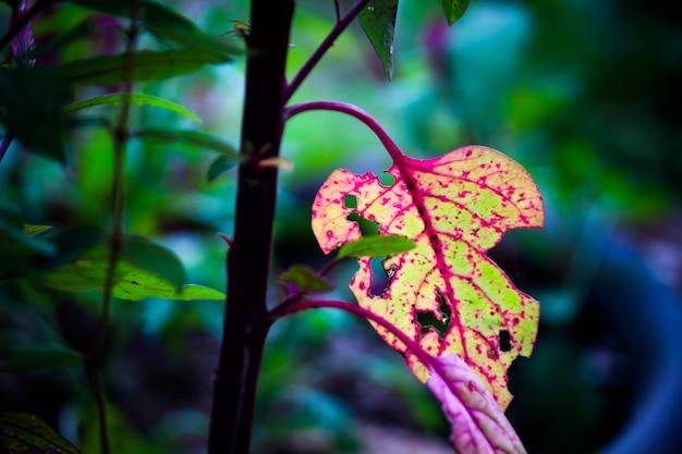 Fogliame tropicale della foresta pluviale piante cespugli felci foglie verdi filodendri e piante tropicali