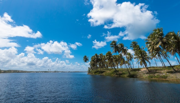 Paesaggio estivo tropicale con palme da cocco e cielo blu.