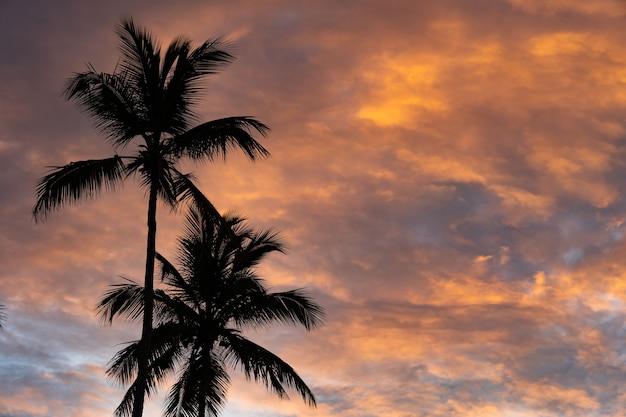 Tramonto tropicale con silhouette di albero di palma con nuvole drammatiche.