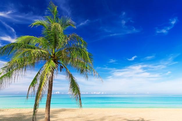 Sabbia bianca tropicale con palme sulla spiaggia, phuket, thailandia