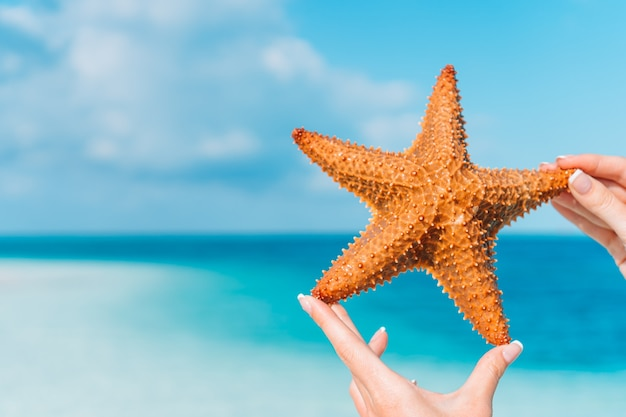 Sabbia bianca tropicale con stelle marine rosse in acqua limpida