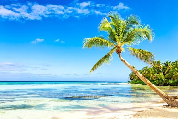 Spiaggia di sabbia bianca tropicale con palme. isola di saona, repubblica dominicana. fondo di viaggio di vacanza.