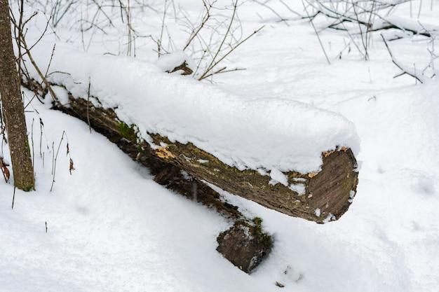 Il tronco di un albero abbattuto coperto di neve nella foresta di inverno