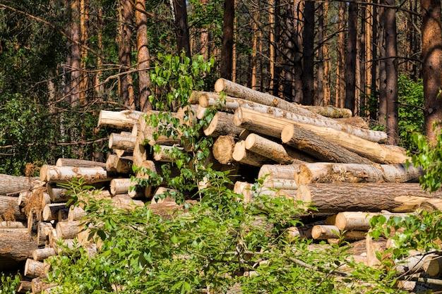 Tronchi di pino