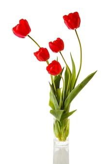 Tulipano. bellissimo bouquet di tulipani in acqua isolato su bianco