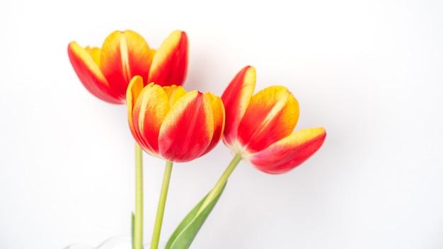 Fiore di tulipano in vaso di vetro con cornice per foto posto su sfondo di tavolo in legno bianco contro parete pulita a casa, primo piano, concetto di arredamento per la festa della mamma.