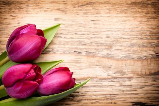 Tulipano sul legno.