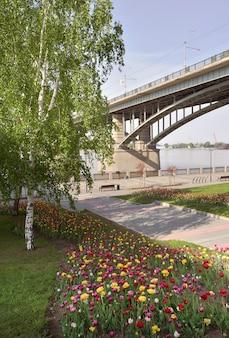 Tulipani sull'argine a novosibirsk aiuole colorate che fioriscono in primavera un ponte stradale
