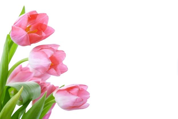 Fiori di tulipani isolati su sfondo bianco