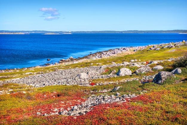 Il paesaggio della tundra delle isole zayatsky con erba fitta verde e cespugli bassi e una vista del monastero di solovetsky all'orizzonte