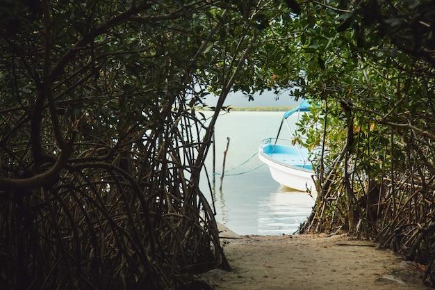 Tunnel nella giungla al lago