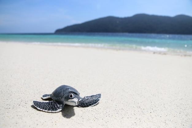 Tartaruga sulla spiaggia