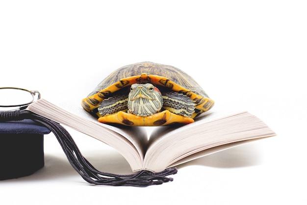 Tartaruga sul libro aperto su sfondo bianco, vicino ampia tartaruga