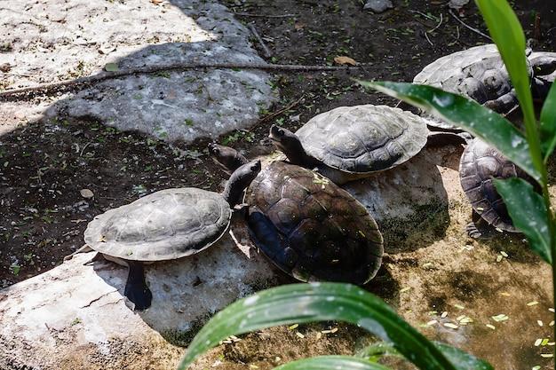 Tartaruga nello stagno