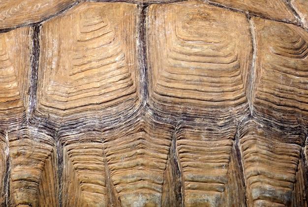 Fondo del modello e della struttura del guscio di tartaruga. ornamento animale e colore. foto di alta qualità