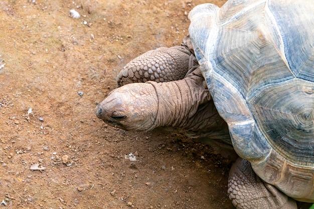 Tartaruga tartaruga che prende il sole a terra