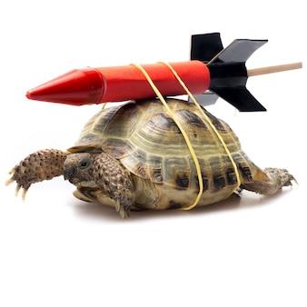 Tartaruga con un razzo legato alla schiena