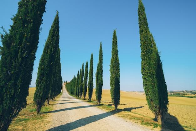 Paesaggio della toscana della strada degli alberi di cipresso in italia.