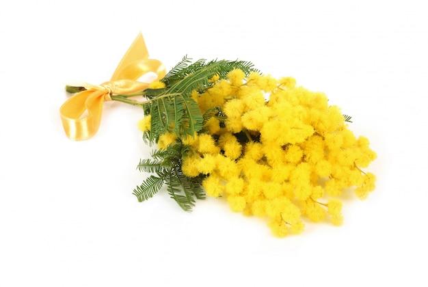 Ramoscello di fiori di mimosa