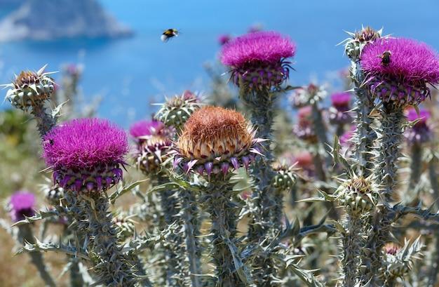 Due api che sorvolano le erbacce dei fiori (primo piano)