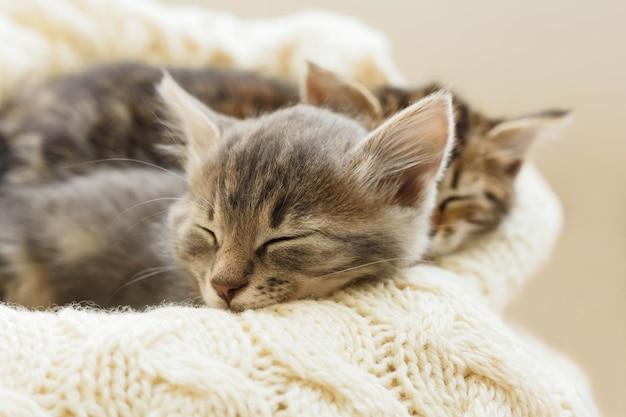 Due gattini di gatti a strisce marroni dormono su un plaid beige di lana lavorato a maglia. piccolo simpatico gatto birichino. casa accogliente.