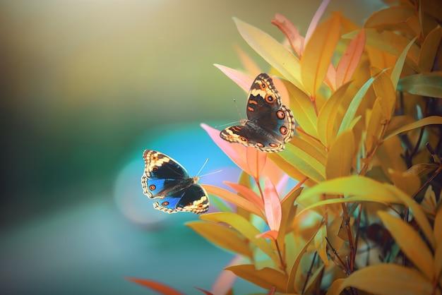 Due farfalle sui fiori con lo sfondo della natura