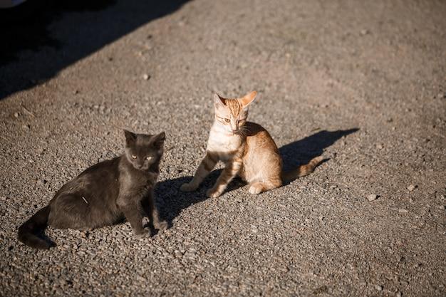 Due gatti neri e rossi che giocano insieme al sole