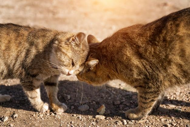 Due gatti innamorati per strada. vita di strada.