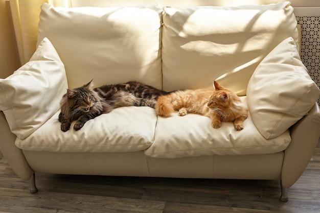 Due gatti sdraiati sul divano bianco a casa i