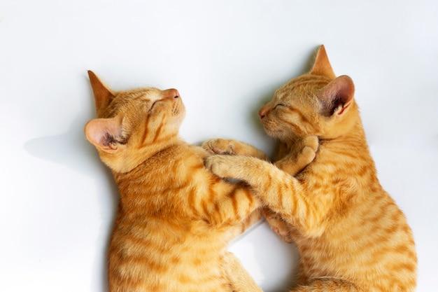 Due gatti che dormono sulla superficie bianca.