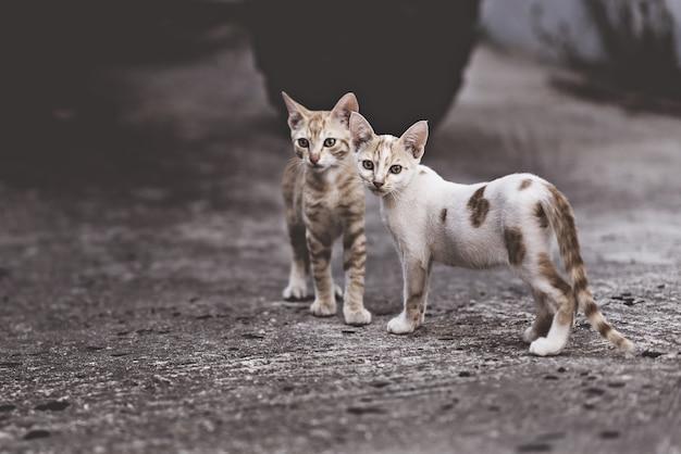 Due gatti in una relazione molto complicata. due gatti domestici che si divertono insieme all'aperto.
