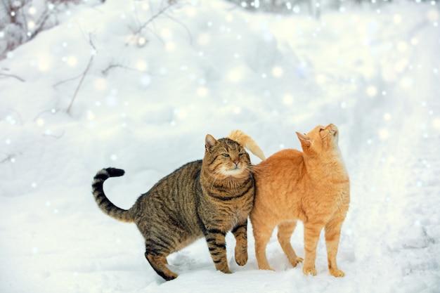 Due gatti camminano sulla neve durante una nevicata