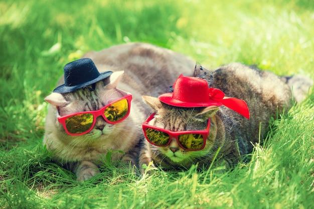 Due gatti che indossano occhiali da sole e cappelli giacciono su un prato in una giornata di sole