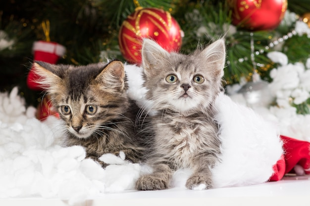 Due gattini di natale fanno capolino dal cappello di babbo natale, distogli lo sguardo